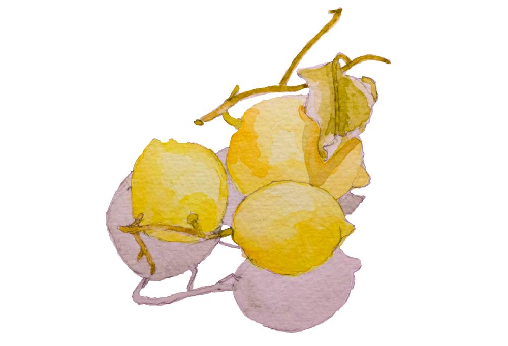 Amalfi Lemons for Silvana de Soissons of The Foodie Bugle, Artisan Food | Fabulous-Fabsters