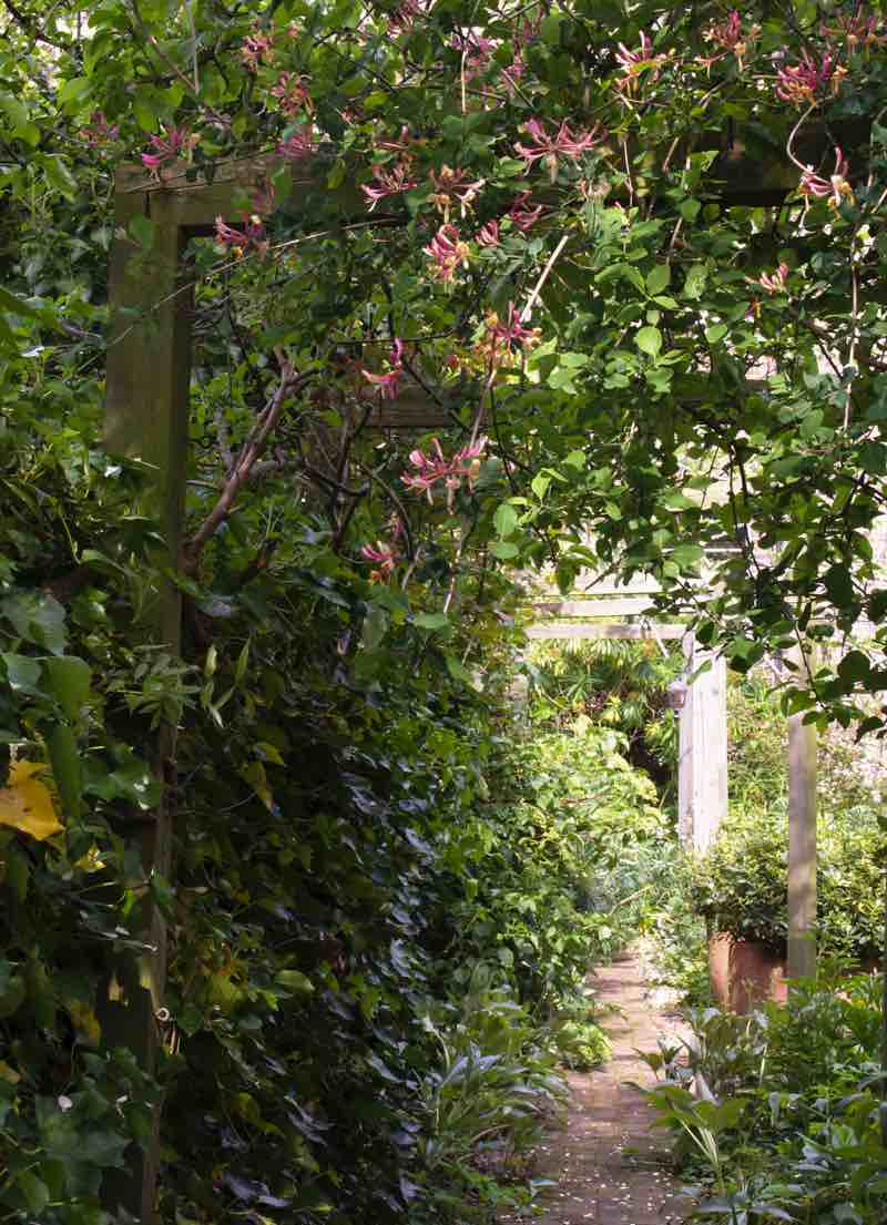 Garden Designer, Non-Morris, author of The Dahlia Papers, overall view of South London garden | Fabulous Fabsters