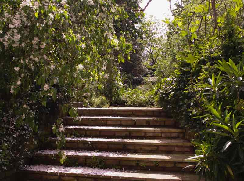 Garden Designer, Non-Morris, author of The Dahlia Papers, view up limestone steps | Fabulous Fabsters