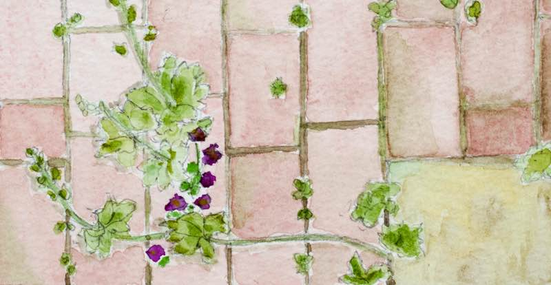 Garden Designer, Non-Morris, author of The Dahlia Papers, Watercolour of Self-Seeders by Christine Chang Hanway | Fabulous Fabsters