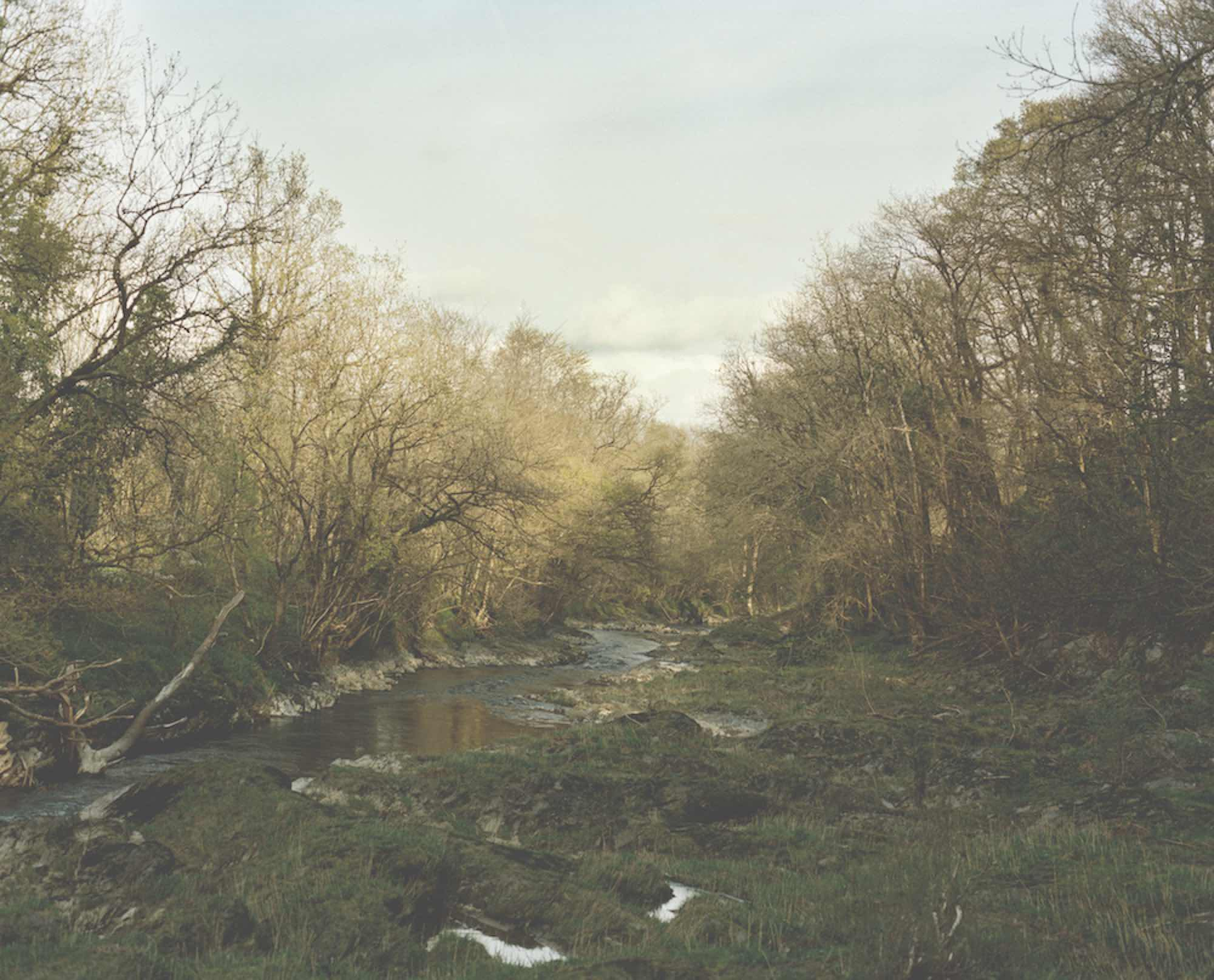 "Cold water stream running through woods. Image for ""Gather Cook Feast"" by Jessica Seaton. Photo by Nick Seaton."