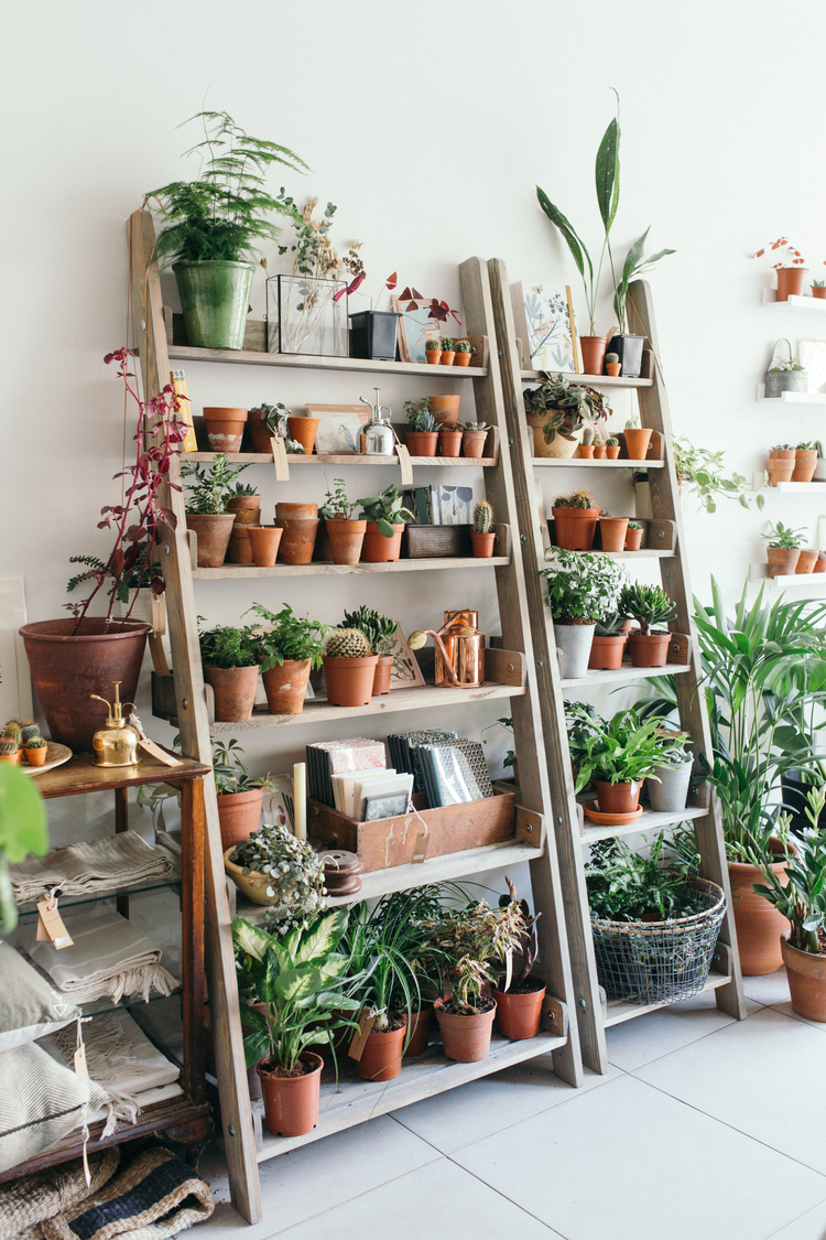 Wood shelving ladders, Botany, house plants