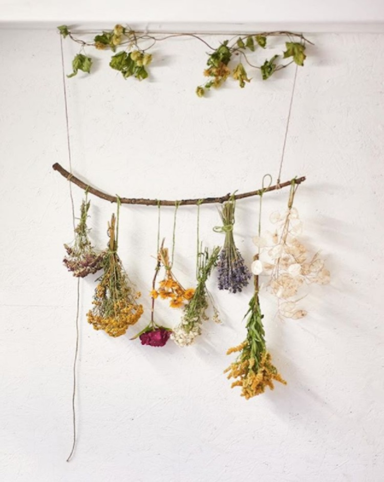 Dried flowers hanging from branches